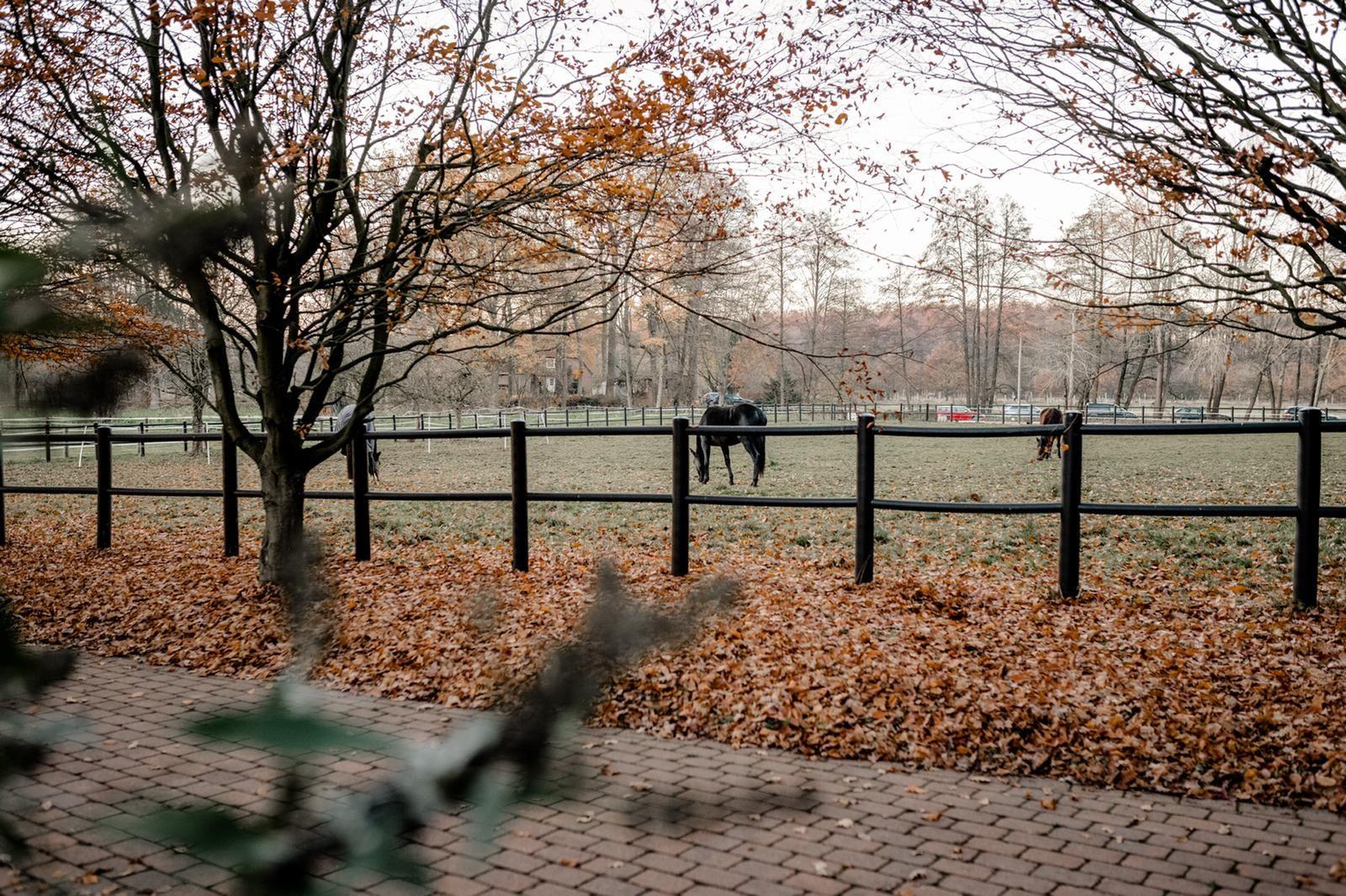 Traumferienwohnung in der Lüneburger Heide