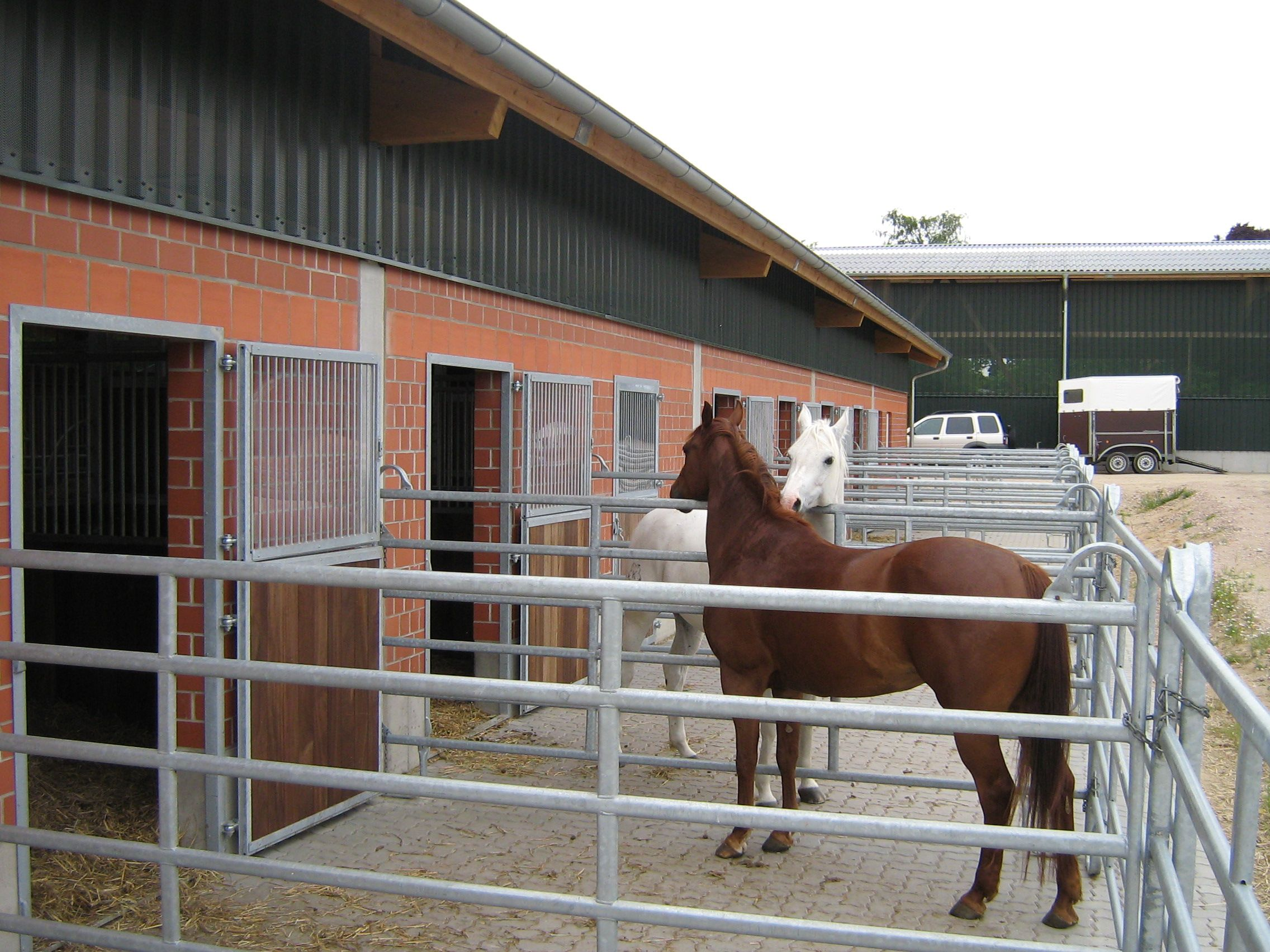 Galloway Star Ranch an der Ostsee mit Wohnmobilstellplatz